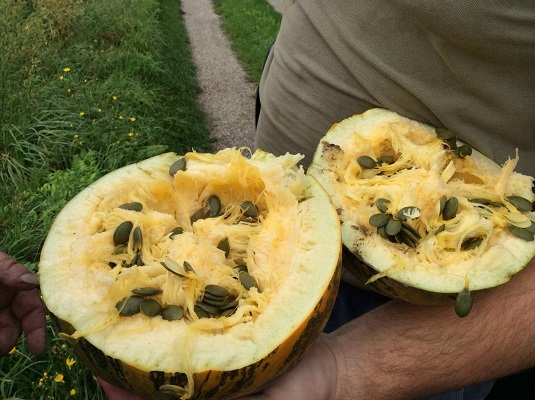 Open pumpkin with seeds inside
